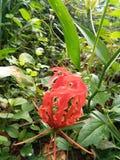 Tamilski kwiat zdjęcia royalty free