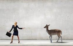 Taming an animal Royalty Free Stock Photos