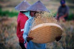 Tamizar el arroz Imagen de archivo libre de regalías