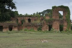 Tamluk, Midnapur, West Bengal/India - November 18, 2017: A ruins of the Pal dynasty in bengal. Remains of a mansion stock image