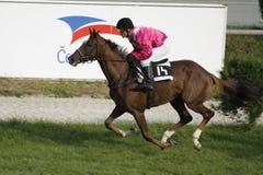 Tammy'n chic dans la course de chevaux de rue Leger de n Photos libres de droits