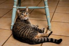 Tammykat die op betegelde vloer bij de voeten van een stoel liggen stock afbeelding
