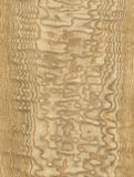 Tamo wood texture. Wood txture of the Tamo tree. For 3D, graphic and interior design Royalty Free Stock Photos