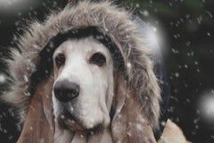 Tampão do cão na queda de neve Fotos de Stock Royalty Free