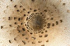 Tampão do cogumelo Fotos de Stock Royalty Free
