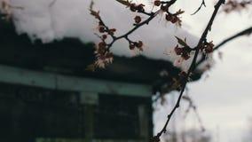 Tampão grande da neve no telhado da casa no canto da casa Neve de derretimento na primavera vídeos de arquivo