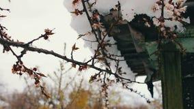 Tampão grande da neve no telhado da casa no canto da casa Neve de derretimento na primavera video estoque