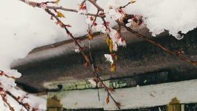 Tampão grande no telhado da casa no canto da casa, ramos da neve de uma árvore de maçã de florescência video estoque