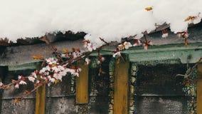 Tampão grande no telhado da casa no canto da casa, ramos da neve de uma árvore de maçã de florescência vídeos de arquivo