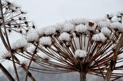 Tampões da neve, tempo de inverno, fundo foto de stock royalty free