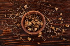 Tampões de liberdade, cogumelos mágicos imagens de stock royalty free