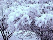 Tampões macios da neve nas árvores do parque imagem de stock