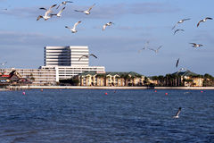 Tamp and the ocean. Seagulls fly by as a view of the tampa shoreline is visible Stock Photo