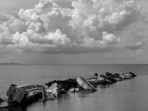 Tampa Bay fiskare B&W Arkivbild