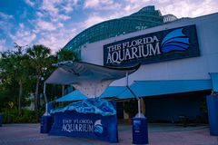 Tampa Bay, Florida. April 28, 2019 Manta Ray in The Florida Aquarium main entrance. royalty free stock photo