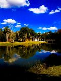 Tampa beauty. Summer colors bright bold wilderness water grass landscape design photography Stock Image