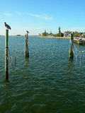 Tampa coastline. Scenic view of Tampa coastline with birds perched on posts in foreground, Florida, U.S.A Stock Image
