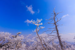 Tampa da árvore pela neve Imagem de Stock Royalty Free