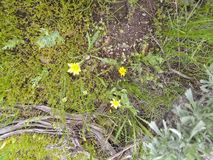 Tampa da grama da flor amarela fotos de stock royalty free