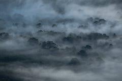 Tampa da névoa a floresta na manhã Fotografia de Stock