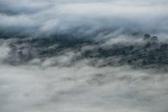 Tampa da névoa a floresta na manhã Imagens de Stock
