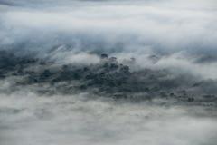 Tampa da névoa a floresta na manhã Imagem de Stock Royalty Free
