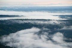 Tampa da névoa a floresta na manhã Imagem de Stock