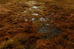 Tampa das cores da queda do pântano da floresta do musgo e da grama do pântano Imagens de Stock
