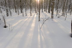 Tampa de neve branca do inverno nas sombras do sol da manhã Imagem de Stock