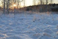 A tampa de neve do rio da floresta da campainha do inverno no nascer do sol Imagens de Stock Royalty Free