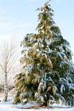 Tampa do pinheiro com neve Imagens de Stock Royalty Free