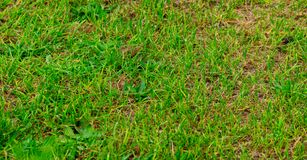 Tampa escassa da grama do gramado foto de stock