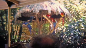 TAMPA, FL -1973: The theme park in the early days, complete with wild parrot birds. stock video