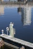 Tampa Florida horisontreflexion Fotografering för Bildbyråer
