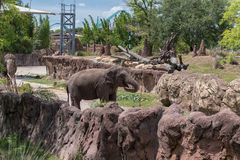 TAMPA, FLORIDA - MAY 05, 2015: Elephant in Busch Gardens Tampa Bay. Florida. Stock Photography