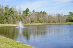 Tampa-Palmengemeinschaft Lizenzfreie Stockfotos