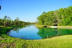 Tampa-Palmengemeinschaft Stockfotos