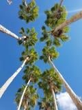 Tampa Rzeczny spacer Zdjęcia Stock
