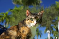 Abby cat. Abby the tabby cat in Naples Florida Stock Photo