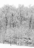 Tampas de neve frescas uma floresta das árvores Fotos de Stock Royalty Free