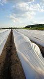 Tampas plásticas brancas da fileira no campo Imagem de Stock Royalty Free