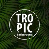 Tampas tropicas na moda do teste padrão ajustadas Fundos florais do projeto para Imagem de Stock Royalty Free
