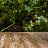 Tampo da mesa de madeira rústico vazio no fundo borrado do aipo no Imagem de Stock Royalty Free