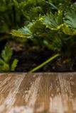 Tampo da mesa de madeira rústico vazio no fundo borrado do aipo no Fotos de Stock