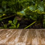 Tampo da mesa de madeira rústico vazio no fundo borrado do aipo no Imagens de Stock Royalty Free