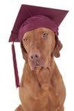Cão da graduação Fotografia de Stock