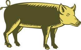 Tamworth Pig Side Woodcut Stock Photography