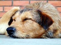Tan and Black Long Coat Medium Dog Stock Photos