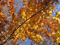 Tan Colored Leaves Royaltyfria Foton