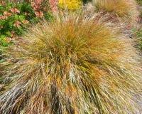 Tan Grass Foto de archivo libre de regalías